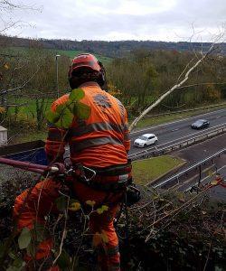 Abergavenny Motorway Road Tree Services D L Corran Tree Surgeons