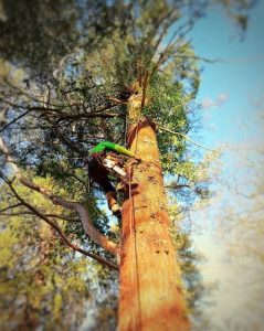 DL Corran Tree Surgery USK South Wales