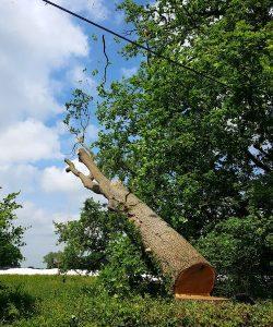 Tree Felling Monmouth D L Corran Tree Surgeons