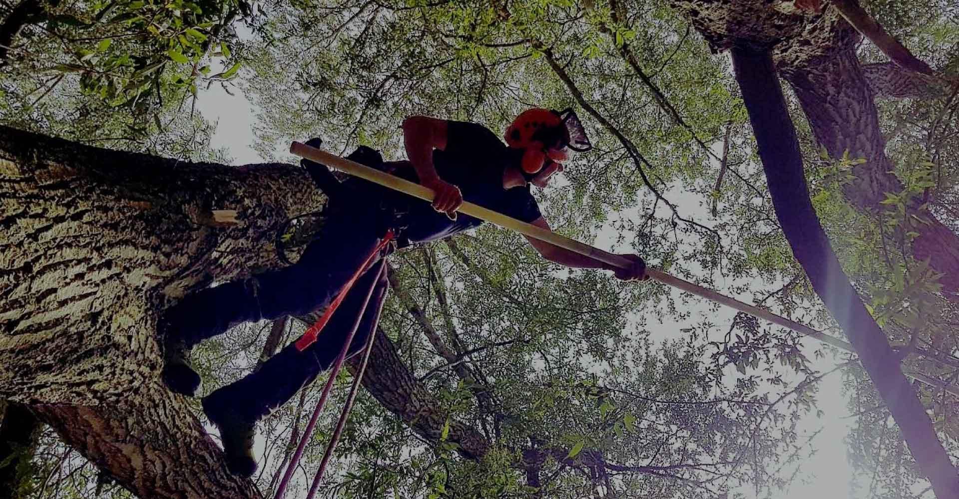 D-L-Corran-Tree-Surgeons-Abergavenny-Slider-2